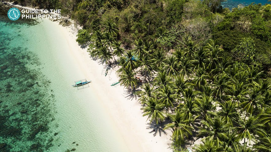 Top view of Port Barton's beach and coconut trees