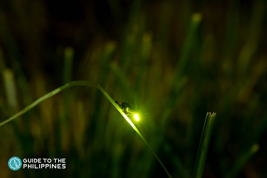 Glowing firefly on a leaf along a river