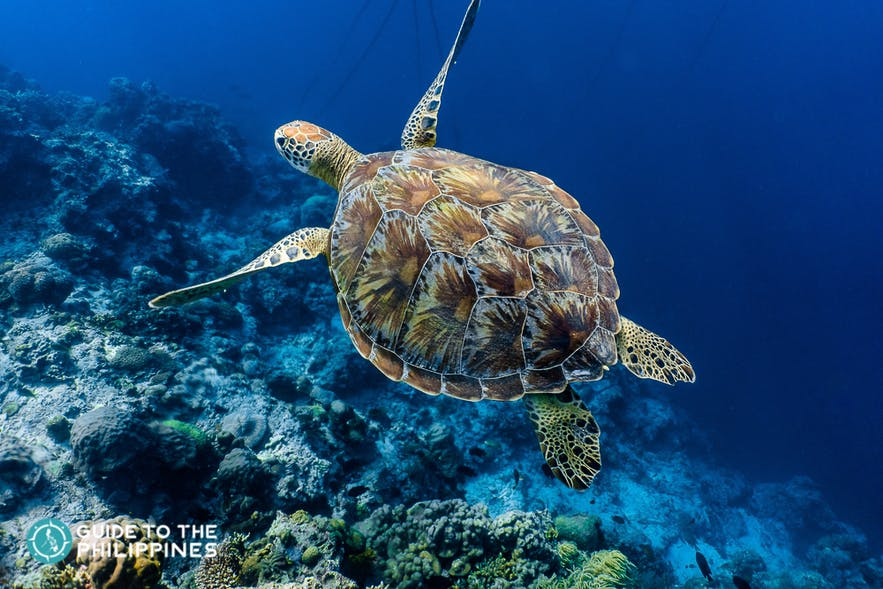 Spotting a turtle at the marine sanctuary