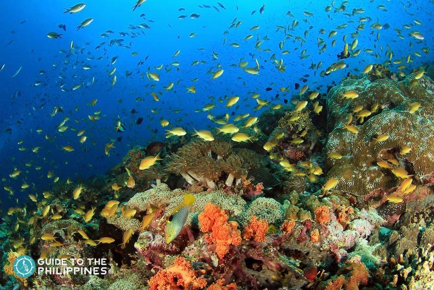 Rich marine life in Boracay