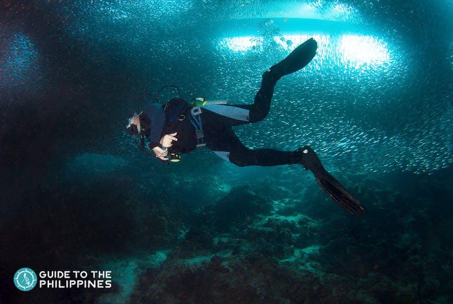 Diver exploring the rich marine life of Moalboal Island, Cebu