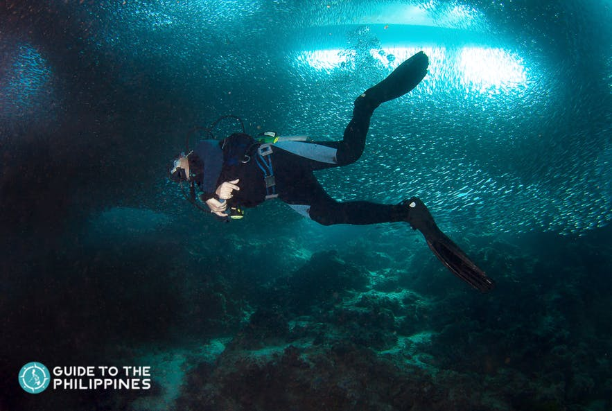 Diver exploring the rich marine life of Moalboal Island, Cebu