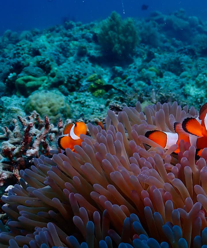 Rich marine life of Malapascua, Cebu
