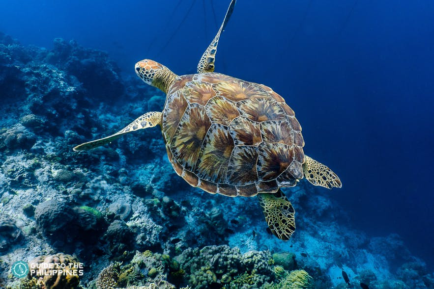 Turtle spotted in one of dive sites