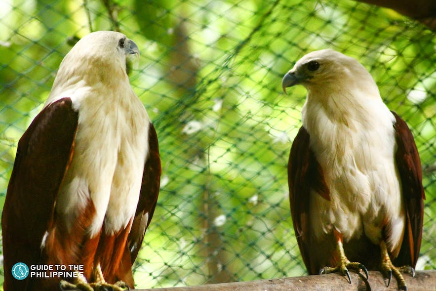 Philippine Eagle Center in Davao