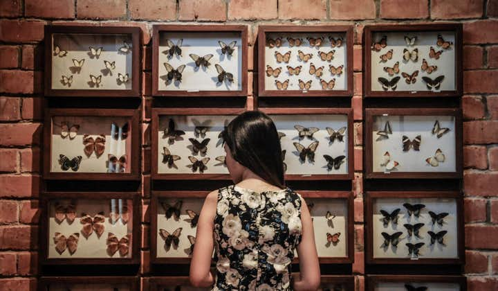 A girl looking at the display of butterflies in Malagos Garden Resort