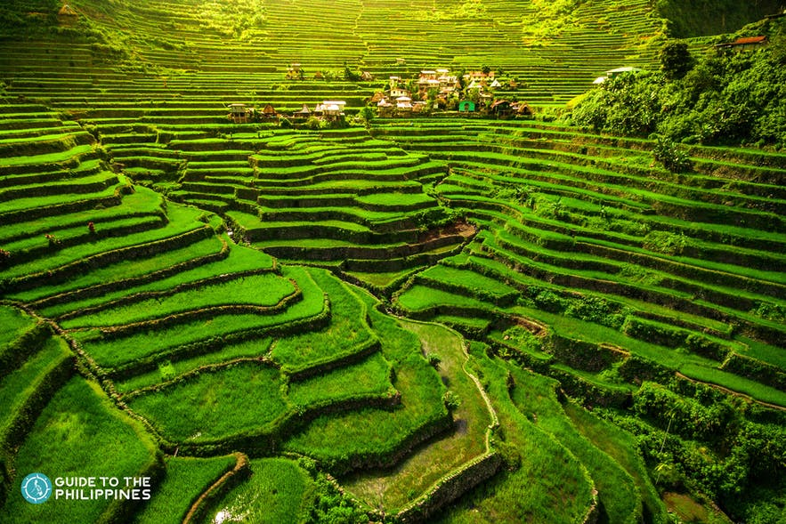 Close up view of one of the UNESCO World Heritage Sites, the Batad Rice Terraces