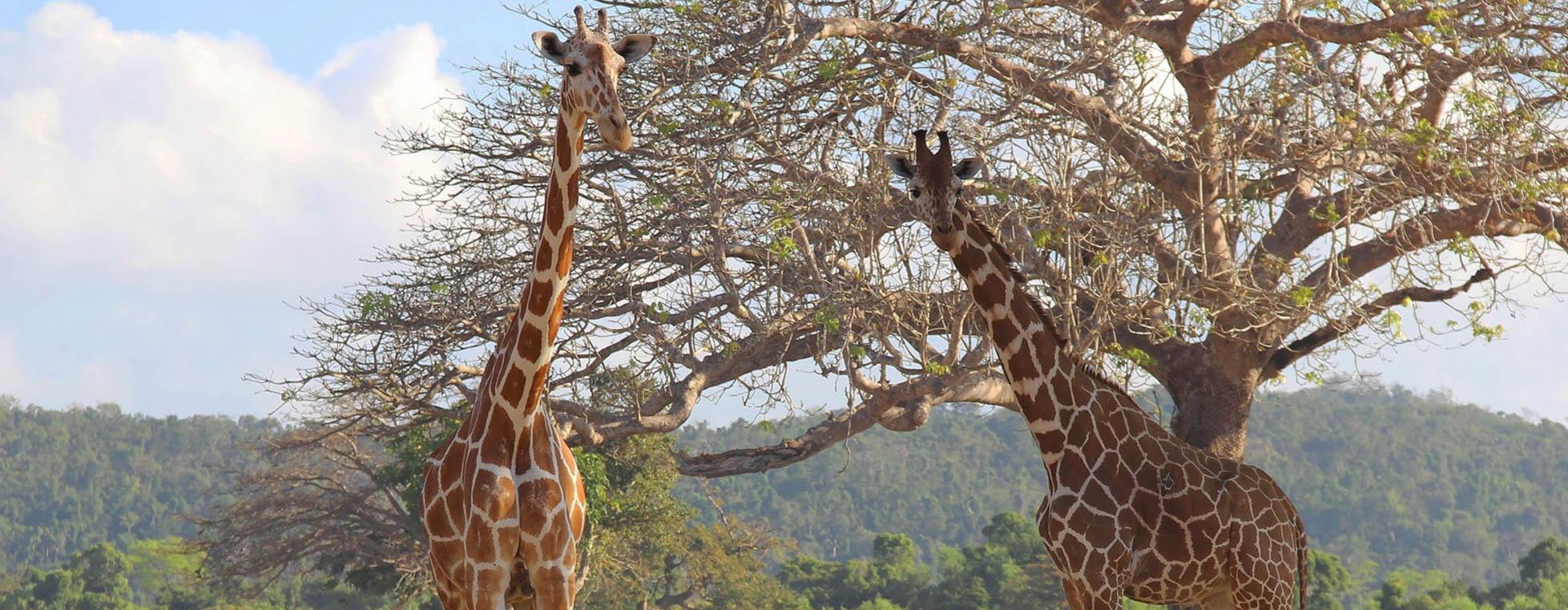 Calauit Safari Coron Full-Day Tour | With Buffet Lunch & Transfers