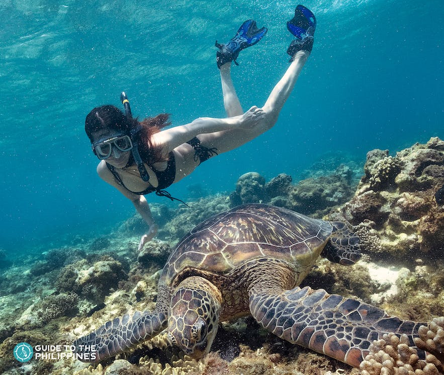 Woman swimming with turtles