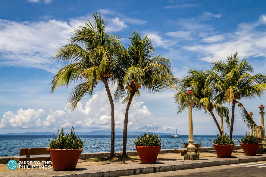 Cocounut Trees of Rizal Boulevard in Dumaguete