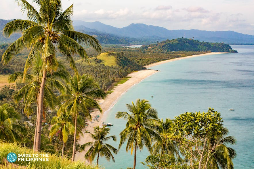 Palm trees and Long Beach in San Vicente, Palawan