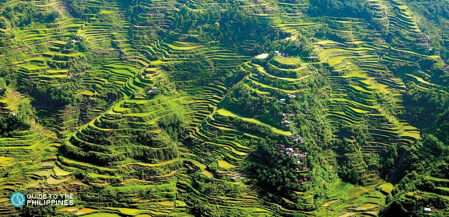 Panoramic View of the beautiful man-made Banaue Rice Terraces