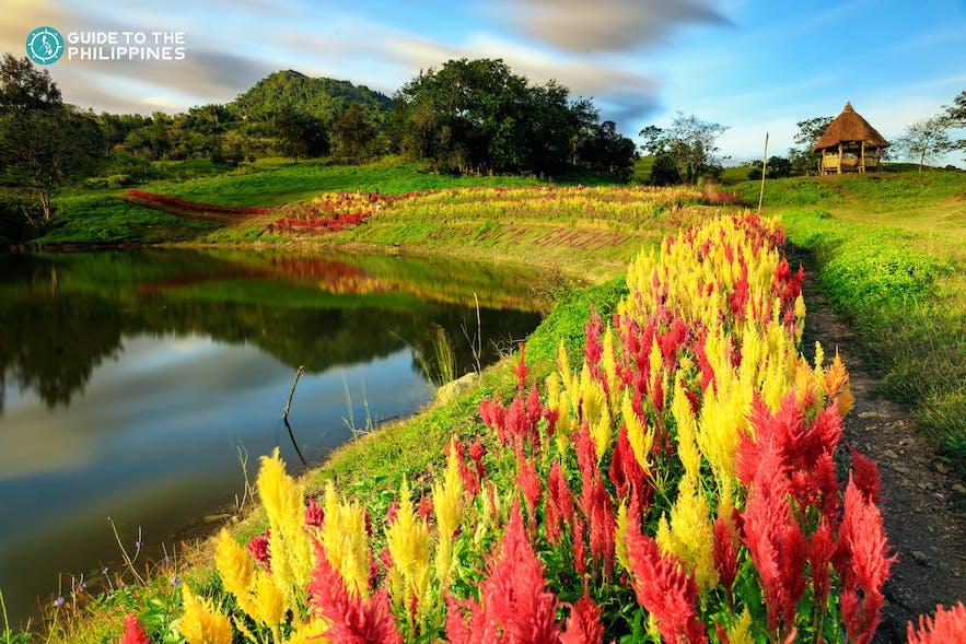 Sirao Flower Garden in Cebu, Philippines