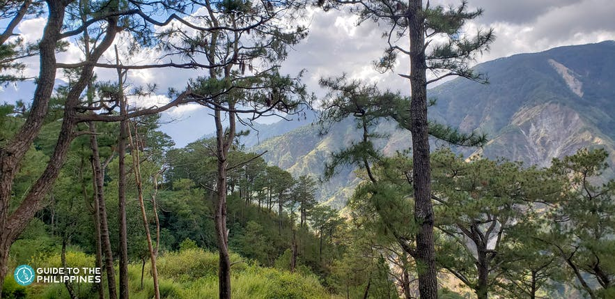 Baguio is dubbed as the City of Pines