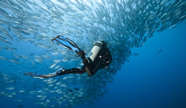 Bohol Balicasag Fun Diving in Diver's Heaven, Black Forest & Cathedral