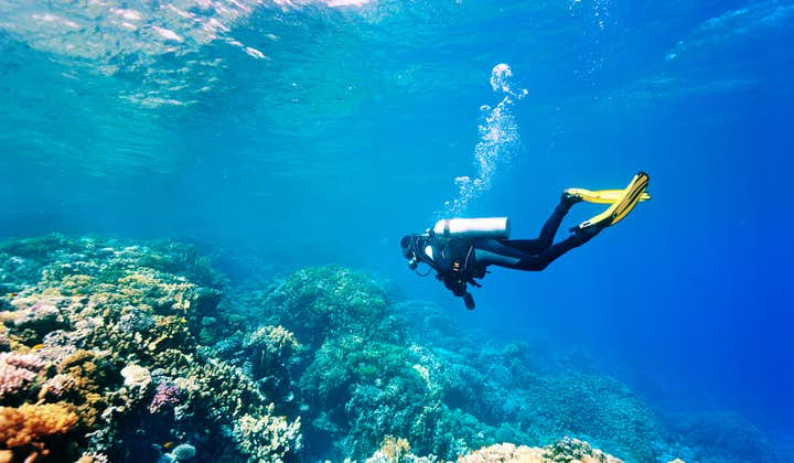 Bohol Panglao Fun Diving in Danao Wall, Kalipayan Wall & Tawala Sanctuary