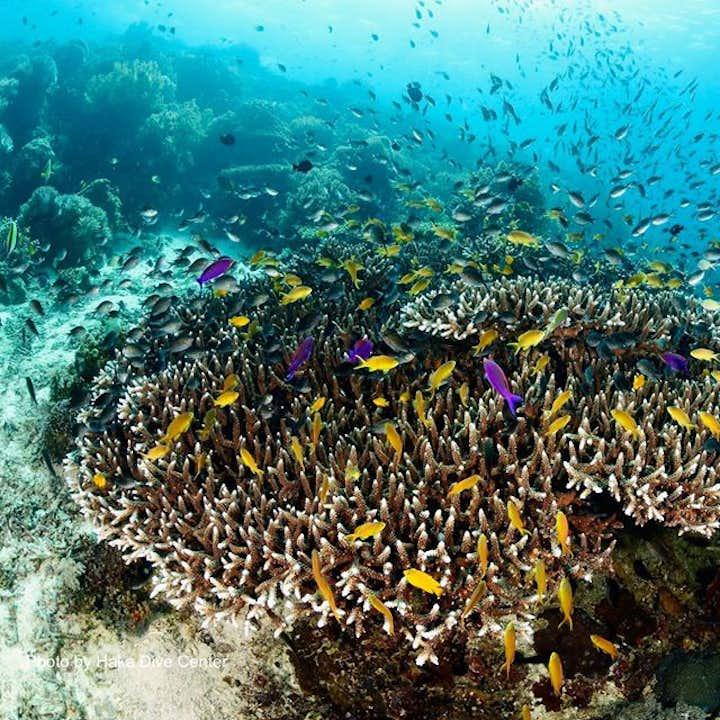 Bohol Balicasag Fun Diving in Marine Sanctuary, Rudy's Rock & Black Forest