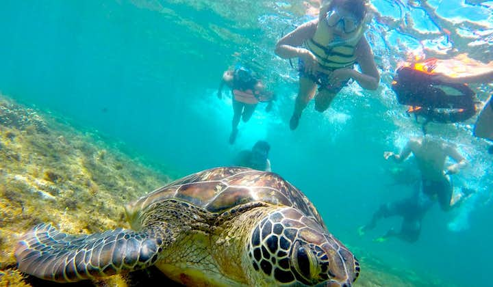 Apo Island Negros Oriental Snorkeling Tour with Lunch & Transfers from Dumaguete