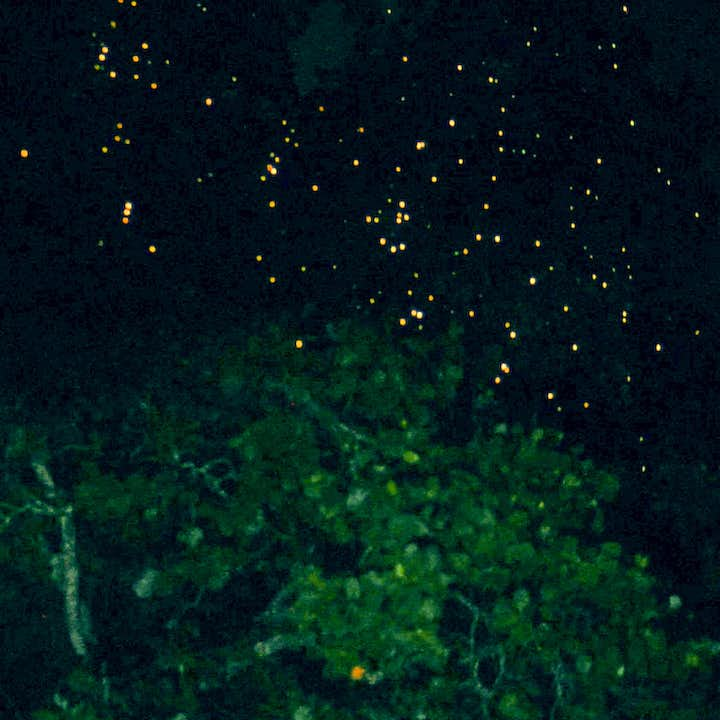 Bohol Loay Private Firefly Watching Tour with Dinner