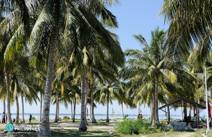 Coconut trees at Sangay Siapo Island in Tawi-Tawi, Philippines