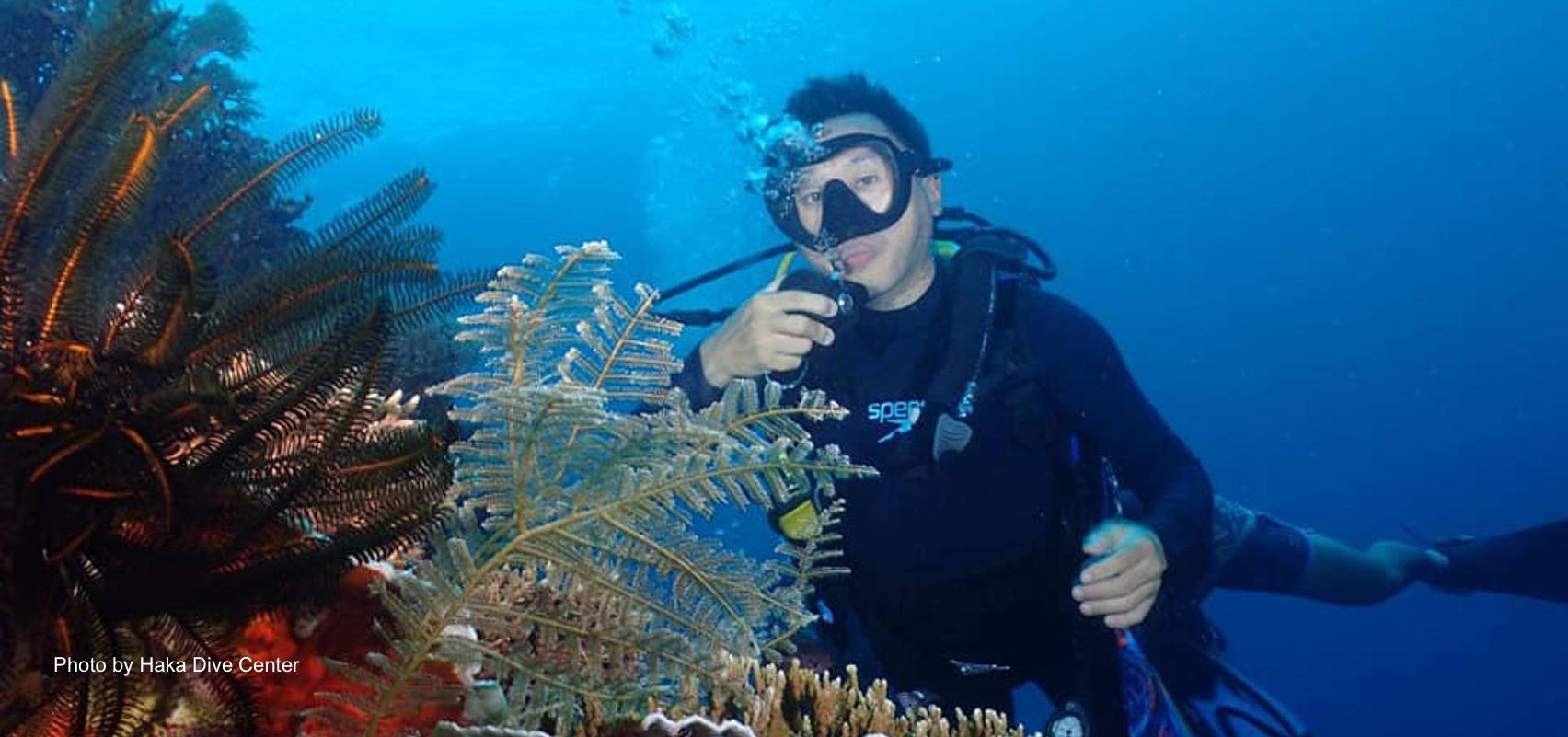Bohol Pamilacan Fun Diving in Pamilacan Sanctuary, Dakit Dakit & Spanish Tower
