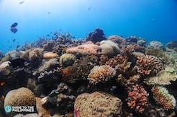 Lusong Coral Garden
