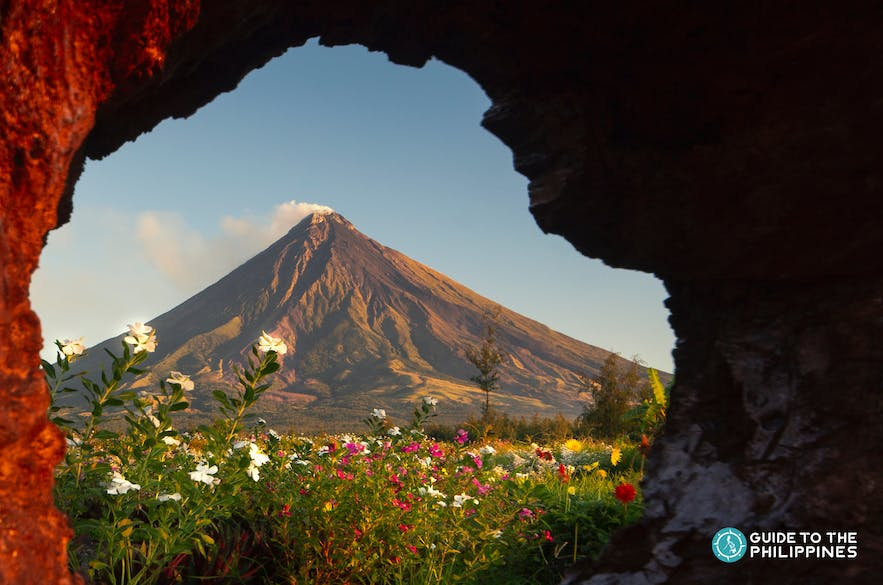View of Mayon Volcano from a flower field