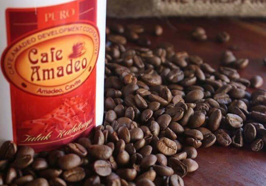 Robusta coffee beans in Cavite