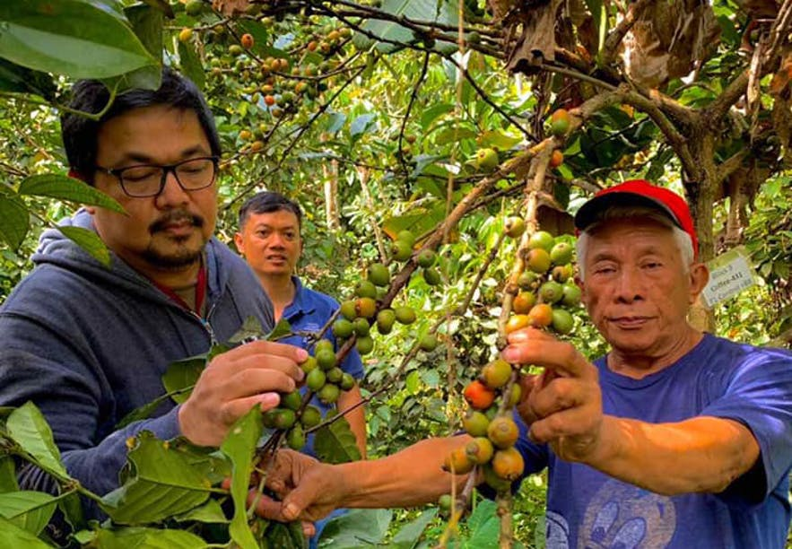 People checking out coffee beans in Gourmet Farms in Cavite