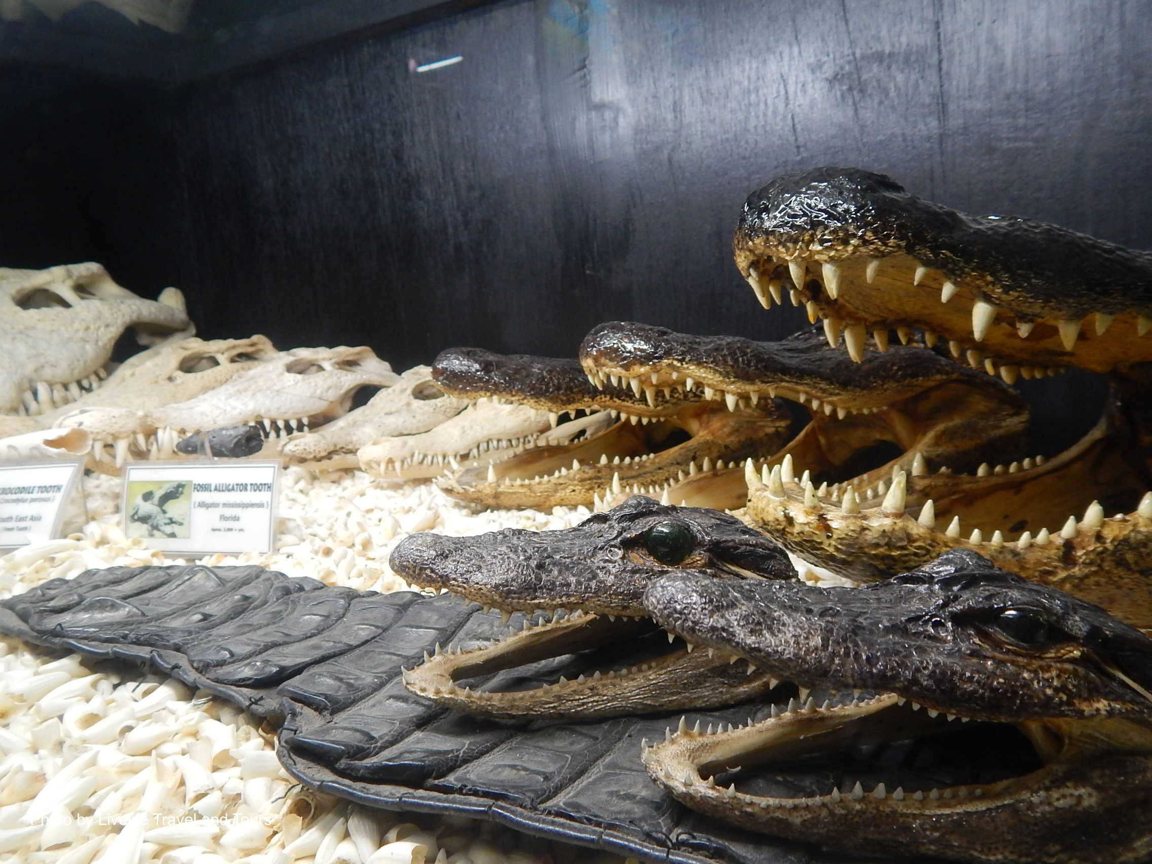 Crocodile display at the Crocodile Park & D'Bone Collector Museum in Davao