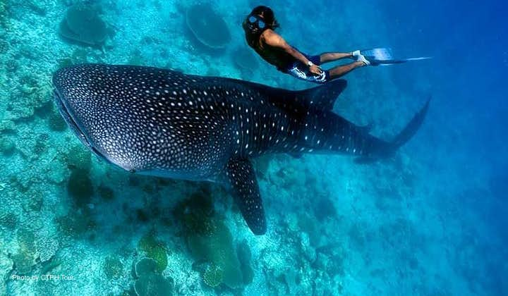A diver during the whale shark interaction tour in Donsol
