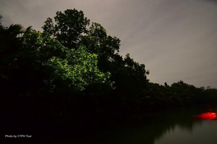 Fireflies during the firefly watching tour in Ogod River