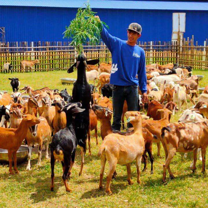 A farmer feeding the goats in Dagui Family Farm