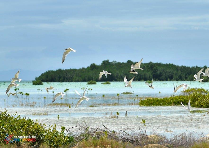 Birds flying in Olango Island Wildlife Sanctuary in Cebu