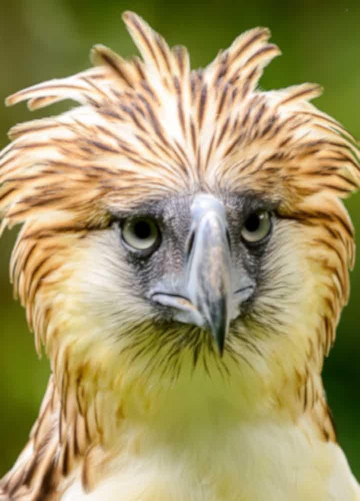 Philippine Eagle Center Tours