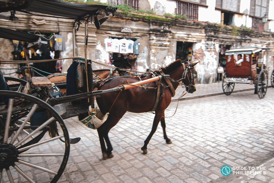 A kalesa on the streets of Calle Crisologo