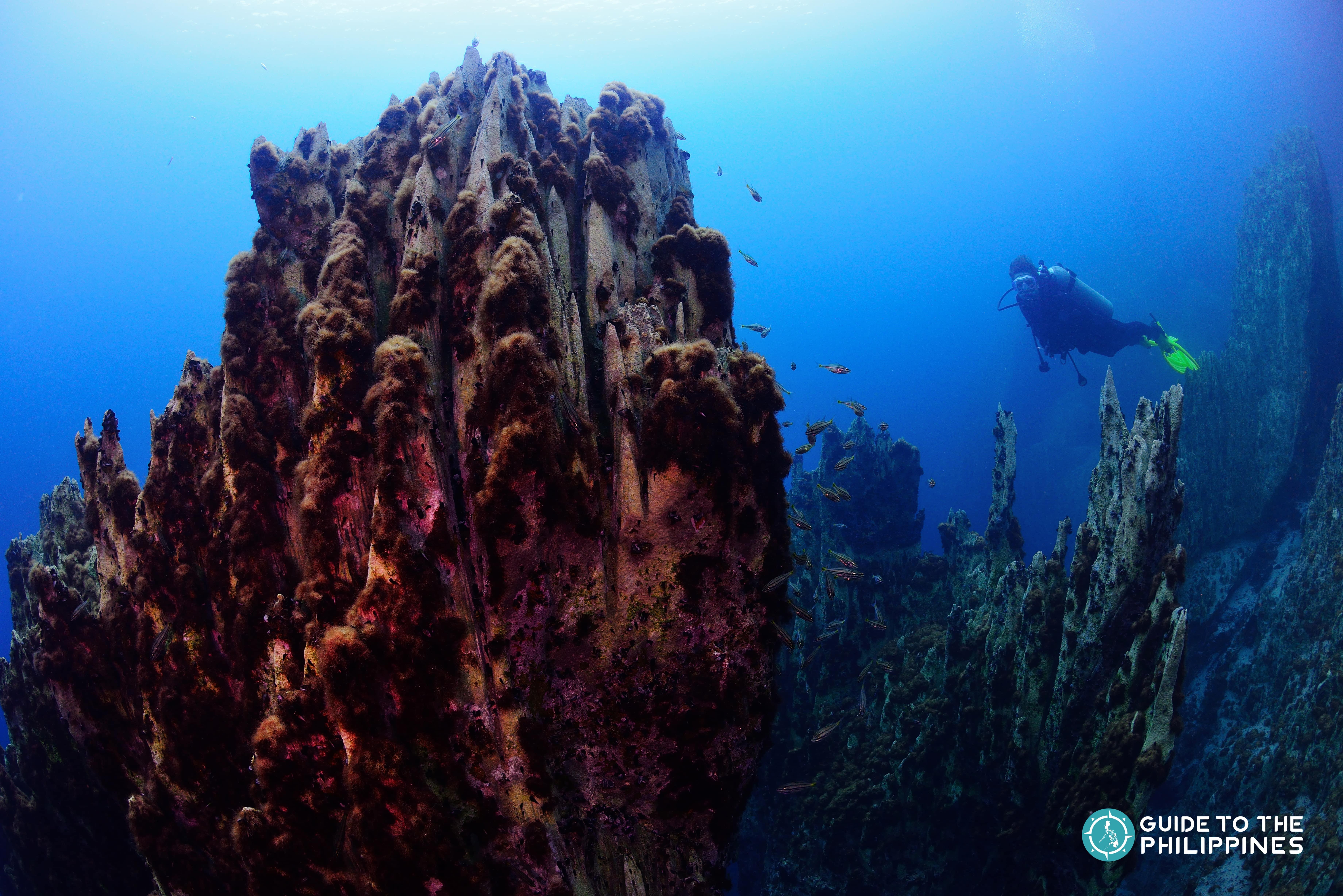 Guide to Diving in Coron Palawan: Explore Shipwrecks from World War II