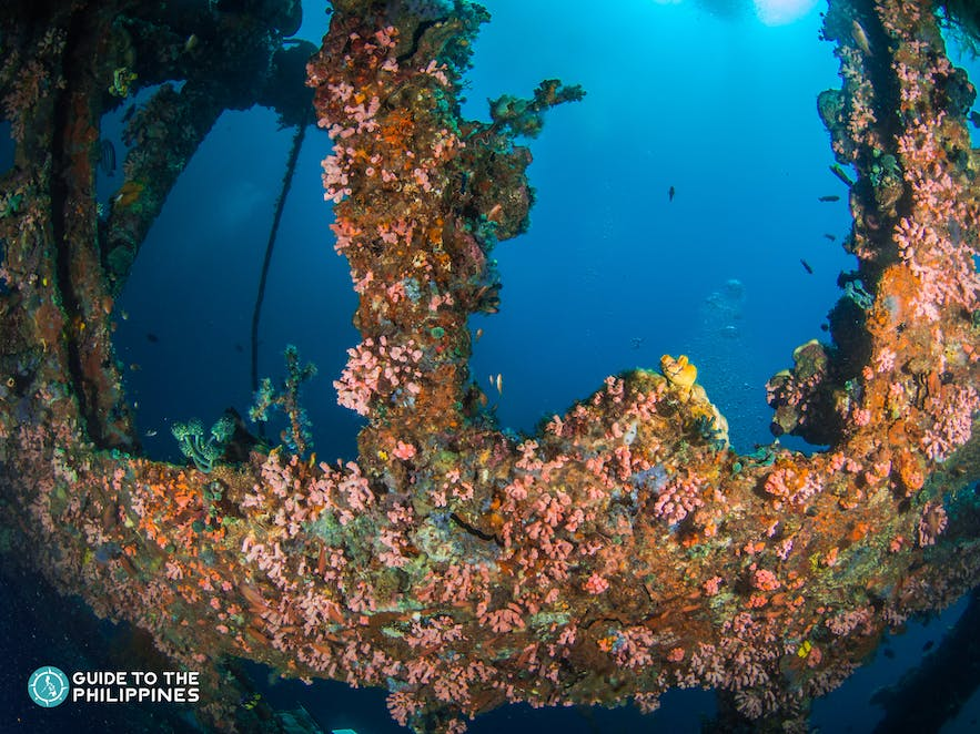 A wreck with colorful corals in Anilao