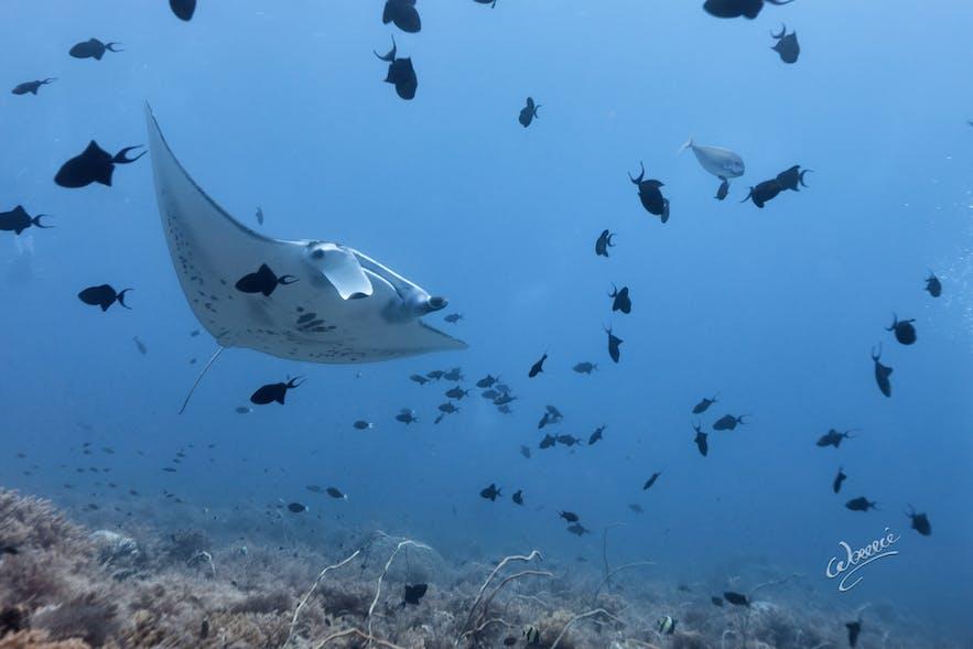 Diving spot named Black Rock in Tubbataha Reef
