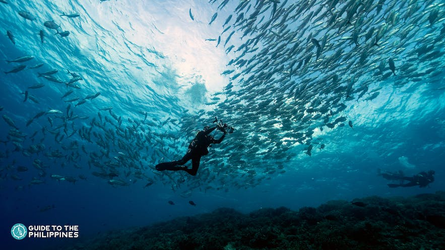 A diver taking photos of the trevallies in Tubbataha Reef