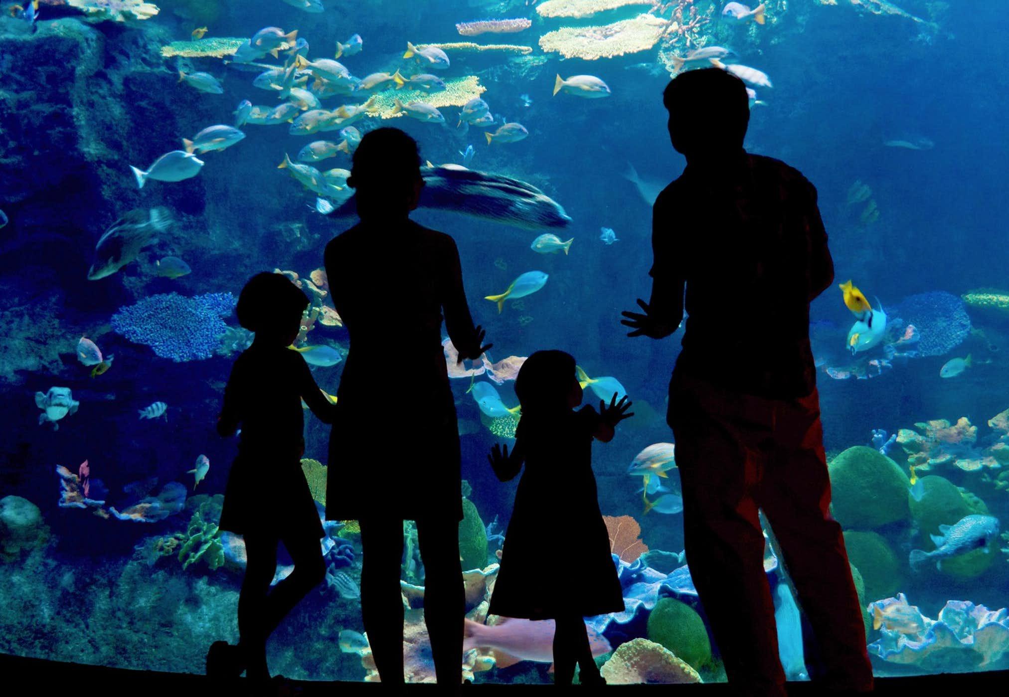 A family looking at the ocean aquarium in Ocean Adventure Pampanga