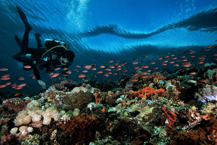 A diver exploring the colorful marine life in San Agapito dive spot