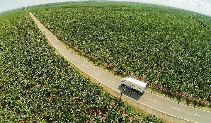 Aerial shot of the Banana plantation farm in Davao