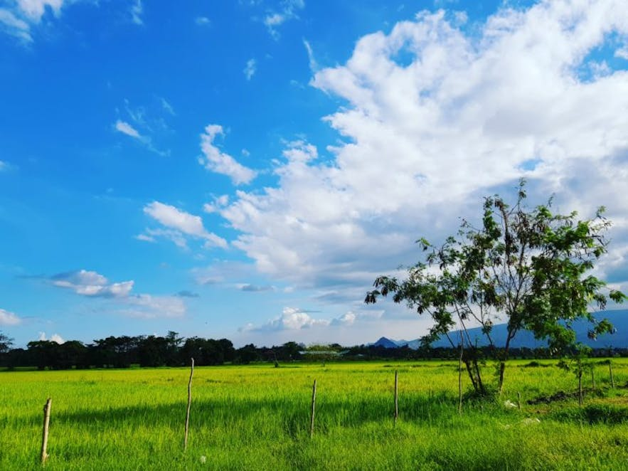 Clear blue skies and green landscape in Our Farm Republic