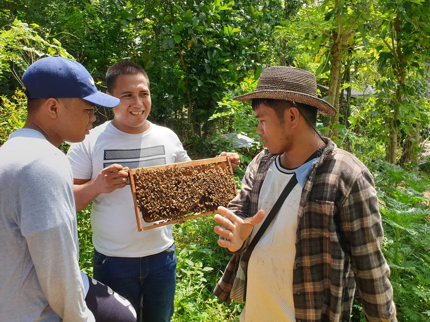 A colony of bees shown to a visitor of the farm