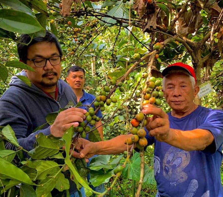 Visitors checking the coffee bean plants in Gourmet Farms