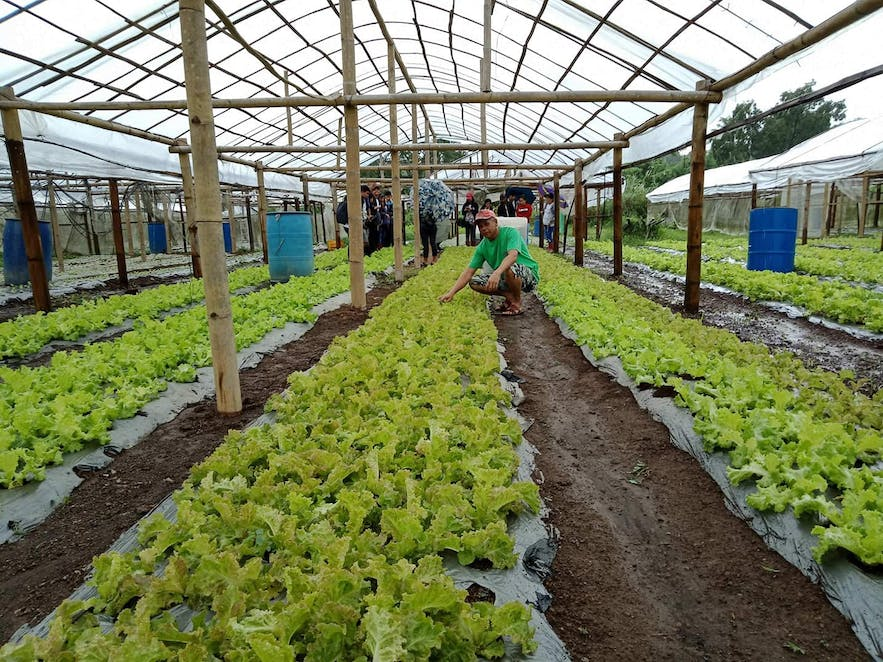 Practice of organic farming in Teofely's Nature Farm
