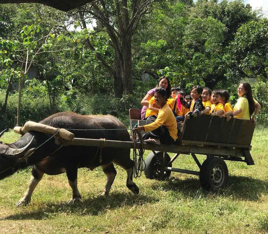 Kids during the guided tour in Holy Carabao Holistic Farms