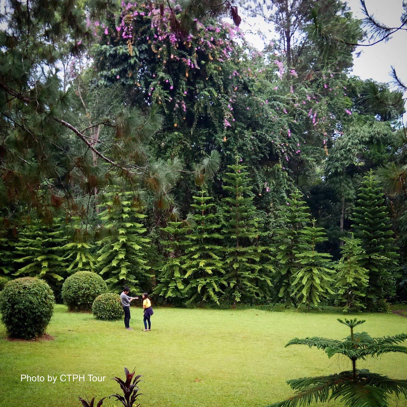 Green landscape of Eden Nature Park in Davao