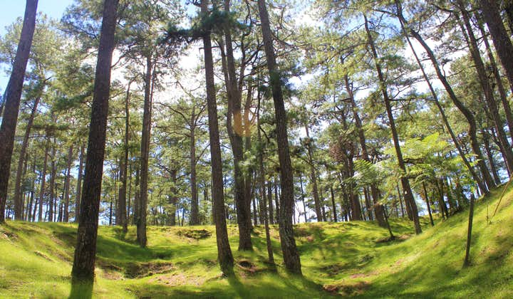 Sunny day in the forests of Camp John Hay in Baguio